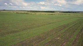 Flyg- enormt grönt vetefält nära skog under molnig himmel arkivfilmer