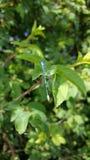 Flyg för kryp för djurskogmakro Royaltyfri Fotografi