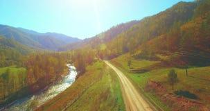 Flyg för mitt- luft över den ny bergfloden och äng på den soliga sommarmorgonen Lantlig grusväg under Kor och bil stock video