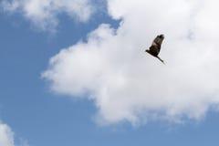 Flyg för svart drake under till och med moln Royaltyfria Foton