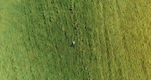 Flyg för vertikal rörelse över affärsmannen som ligger på ny grön äng Bästa sikt på avslappnande man stock video