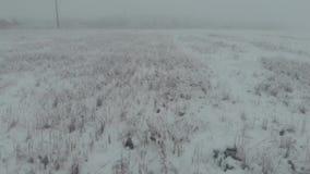 Flyg- flugasikt ovanför snöig fält för vinter på den dimmiga dagen, 4k, låg sikt stock video