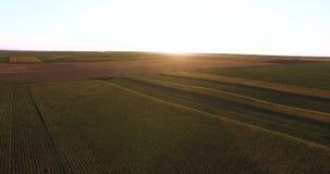 Flyg- flyg över växtfält på solnedgången arkivfilmer