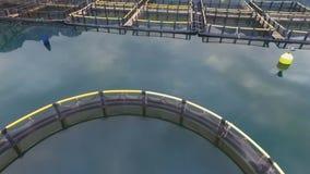 Flyg- fors av kolonin för växande skal, musslor och ostron lager videofilmer