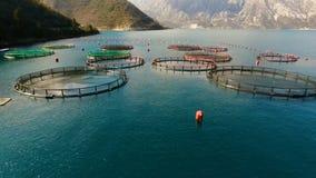 Flyg- fors av lantgården för växande skal, musslor och ostron arkivfilmer