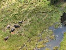 Flyg- fotografi av fem elefanter royaltyfri fotografi