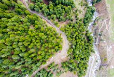Flyg- fotografi av skogar och vägkurvan royaltyfri bild