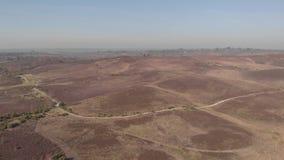 Flyg- framåt längd i fot räknat av den nya Forest National Park med skogslingor och heathlanden under en blå himmel och en di stock video