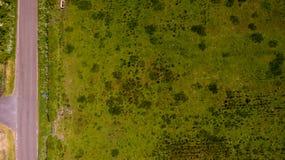 Flyg- grästextur Arkivfoto