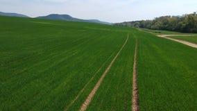 Flyg- granskning av fältet med gröna forsar Fält av vintervete från flygfotografering Jordbruk Kornsk?rdar lager videofilmer