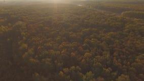 Flyg- höstskog och solen stock video