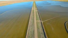 Flyg- längd i fot räknat av ris som växer NSW stock video