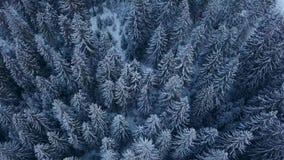 Flyg- längd i fot räknat av skogen för vintergranträd i bergen Sikten från över av sörjer träd som täckas med snö Quadcopter lager videofilmer