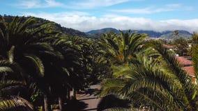 Flyg längs gömma i handflatandungen Sikt från höjden på townscape San Cristobal De La Laguna, Tenerife, kanariefågelöar stock video
