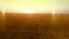 FLYG- lång varm aftonsolnedgångpanorama över fält för skörd för hirs för veteråghavre åkerbrukt lager videofilmer