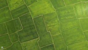 Flyg- landskap för grön risfält Koloni för ris för surrsikt växande i by jordbruks- industri Bruka och arkivfilmer
