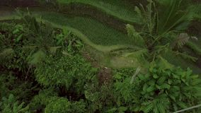 Flyg- landskap f?r r?risf?lt Terrasserad risfält för surr sikt i Sapa, Vietnam Jordbruks- och kornbransch arkivfilmer