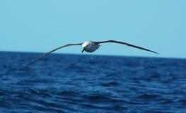 flyg long arkivbild