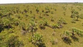 Flyg- naturfältträd