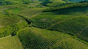Flyg- panna över vingård stock video