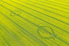 Flyg- perspektivsikt p? gult f?lt av att blomma rapsfr?- och traktorsp?r arkivbilder