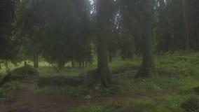 Flyg- resa i magisk dimmig skog på den steniga banken av trädet för flyg- granskning för flod stock video