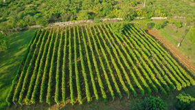 Flyg- rund fors för vingård Arkivfoto