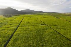 Flyg- sikt över koloni av det agriculutural landskapet för sockerrottingar i den tropiska underland royaltyfri fotografi