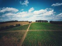 Flyg- sikt över vingård i Europa Arkivbilder