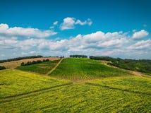 Flyg- sikt över vingård i Europa Royaltyfri Bild