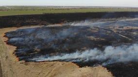 Flyg- sikt av att bränna torrt gräs i fältet Kranskott och lutandeteknik Katastrof och nöd- händelser som är atmosfäriska stock video