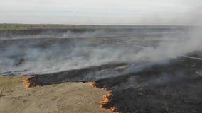 Flyg- sikt av att bränna torrt gräs i fältet, lutandeteknik Katastrof och nöd- händelser, negativ inverkan på naturen stock video