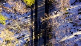Flyg- sikt av bilen som rider p? en skogv?g bland tr?den lager videofilmer