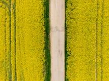 Flyg- sikt av canolarapsfröfältet med väginsidan Åkerbrukt land nära lantgården, ekologibegrepp fotografering för bildbyråer