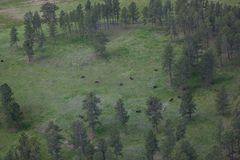 Flyg- sikt av den amerikanska bisonen royaltyfri bild