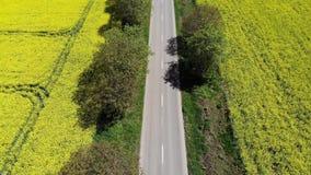 Flyg- sikt av den härliga vägen i ett gult fält arkivfilmer