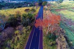 Flyg- sikt av den lantliga vägen med ett kulört träd Bygdsikt Härligt landskap royaltyfria foton