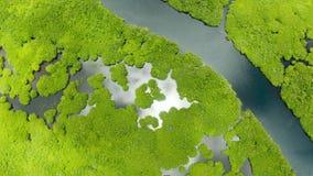 Flyg- sikt av den mangroveskogen och floden lager videofilmer