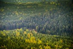 Flyg- sikt av den vintergröna trädskogen Royaltyfri Fotografi