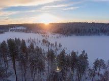 Flyg- sikt av den vintersnowscape och skogen Arkivbilder