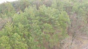 Flyg- sikt av denlövfällande skogen i tidig vår stock video