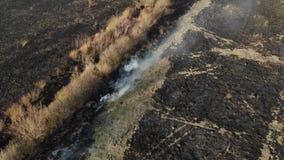 Flyg- sikt av det brända fältet, bränna av torrt gräs Flyga baksida- och lutandetekniken skada miljön lager videofilmer