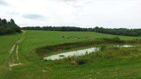 Flyg- sikt av det gröna fältet och sjön Flyga över fältet med grönt gräs och den lilla sjön Flyg- granskning av skogen nära Royaltyfri Bild