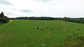 Flyg- sikt av det gröna fältet och sjön Flyga över fältet med grönt gräs och den lilla sjön Flyg- granskning av skogen nära Royaltyfri Fotografi