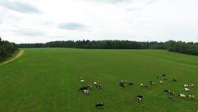 Flyg- sikt av det gröna fältet och sjön Flyga över fältet med grönt gräs och den lilla sjön Flyg- granskning av skogen nära Royaltyfria Bilder