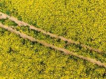 Flyg- sikt av det gula canolafältet i blomfas Ekologijordbruk nära lantgård fotografering för bildbyråer