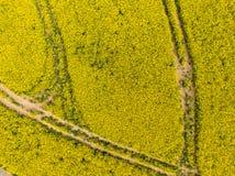 Flyg- sikt av det gula canolaf?ltet i blomfas Ekologijordbruk n?ra lantg?rd arkivfoto