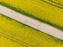 Flyg- sikt av det gula canolaf?ltet i blomfas Ekologijordbruk n?ra lantg?rd fotografering för bildbyråer