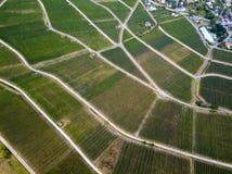 Flyg- sikt av det härliga vingårdlandskapet fotografering för bildbyråer
