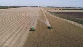 Flyg- sikt av det lantliga landskapet, skörda för sammanslutningar av mogna sojabönor på fält i höst stock video